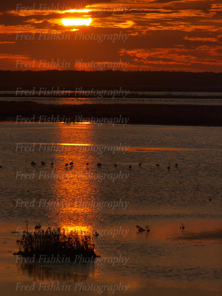 brigantine birds sunset.jpg