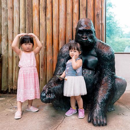 2018木柵動物園