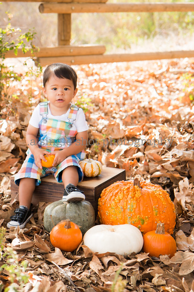 Mees: Fall Minis
