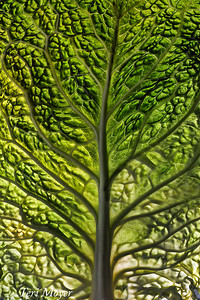 December Theme, Single leaf