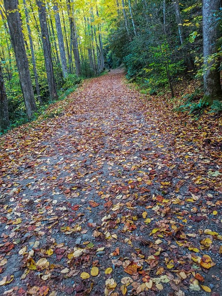 Forest path in fall