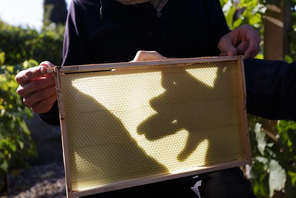 """Eines der """"Rähmchen"""" mit Wachswand für die Bienen."""