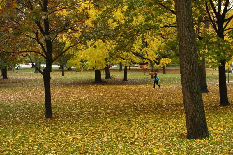 Queens Park in the Rain