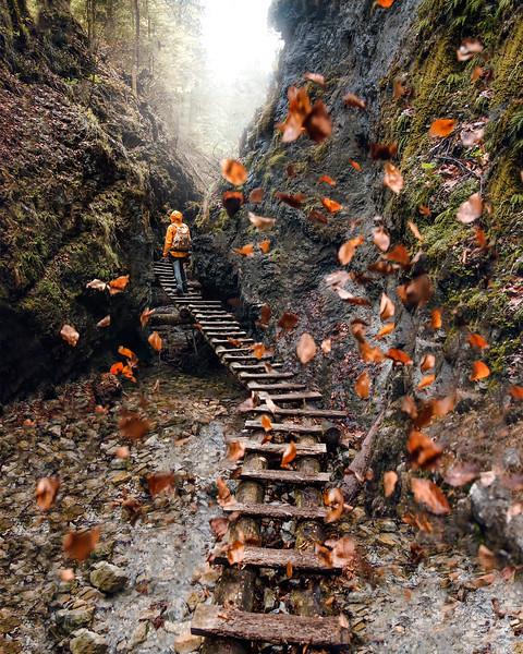 #17 - Slovakia, Slovak Paradise, leaves madness.jpg