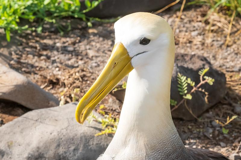 Waved up close on  albatross on Espanola Island