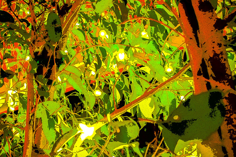 August 12- Foliage.jpg