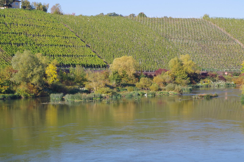 wine country Mosel River.JPG
