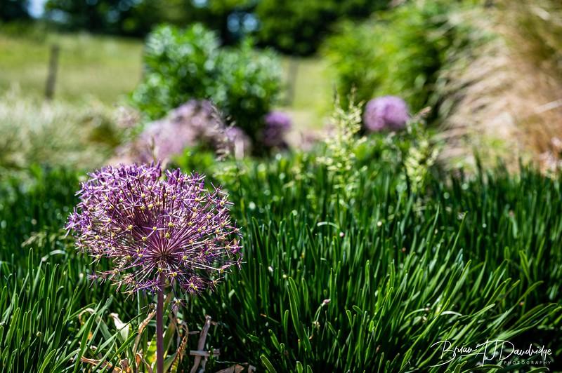 Sussex Prairie Gardens Z6-3755.jpg
