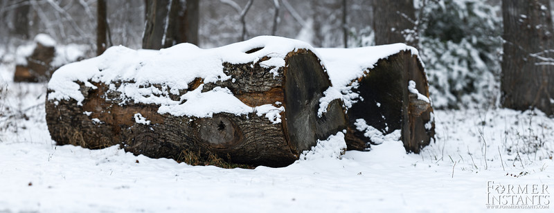 Snowy Logs (Brenizer)