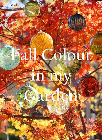 Fall Colour in My Garden
