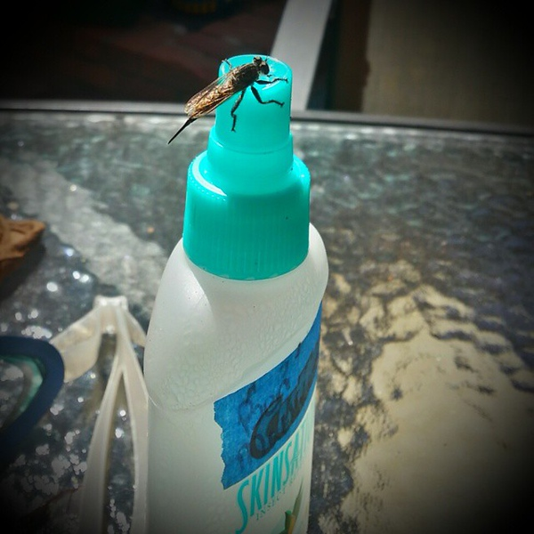 Bug friendly bug spray #weirdplacetosit