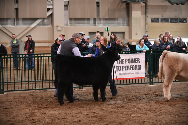 Howard King Memorial Bred and Owned Show