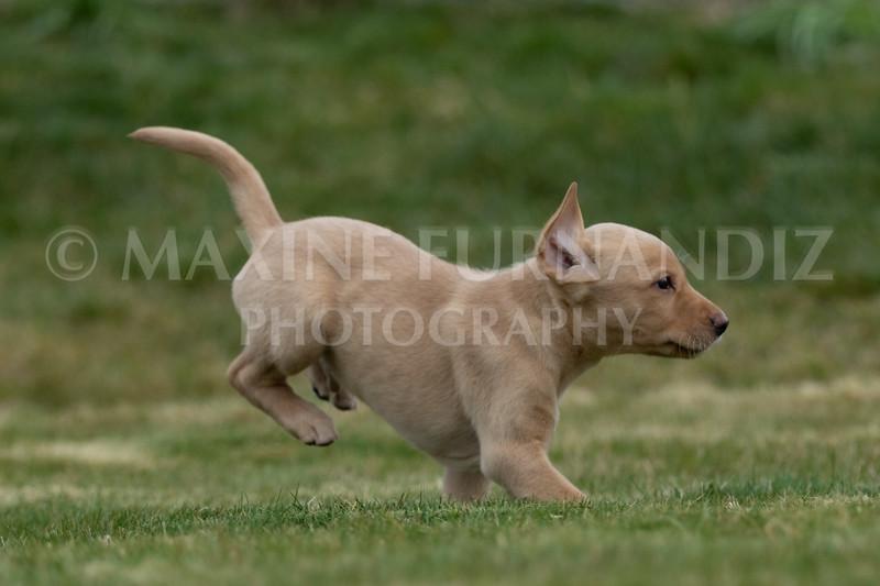 Weika Puppies 24 March 2019-6626.jpg