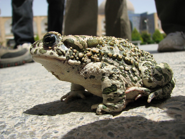 Amphibians around the world