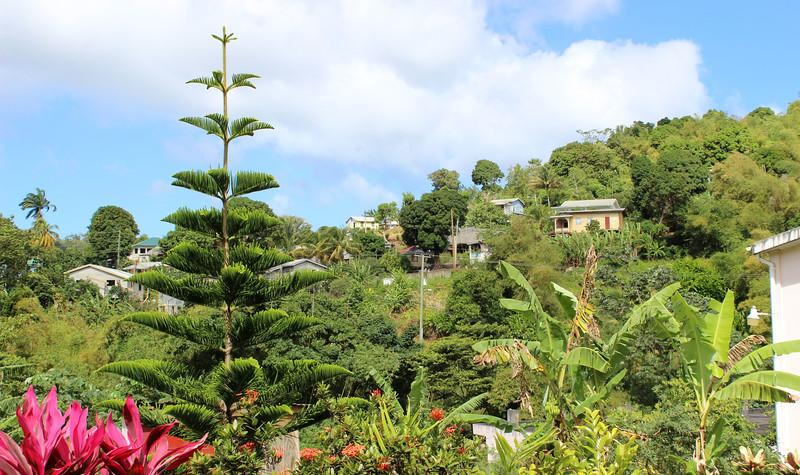 Caribbean-Grenada35.JPG