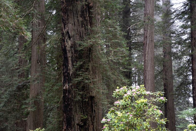 redwoodsFin29-1181.jpg