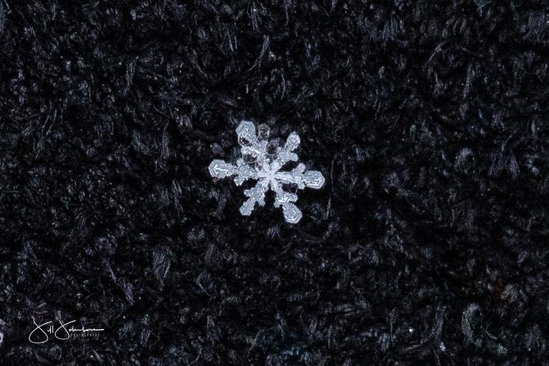 snowflakes-1486.jpg