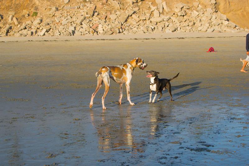dogs_beach-67.jpg