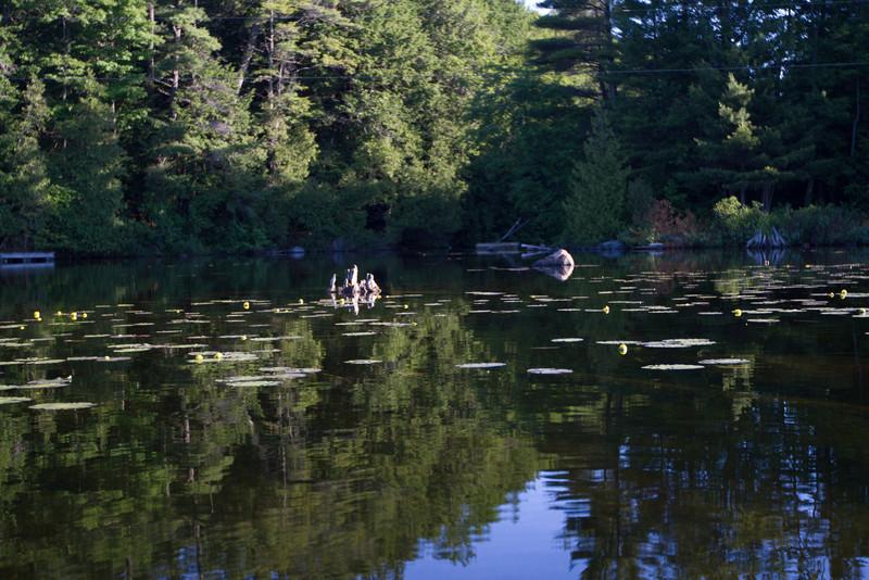 June 11 Stoney Lake Glass_0411.jpg
