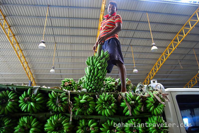 bananas at Dambulla wholesale market (3).jpg
