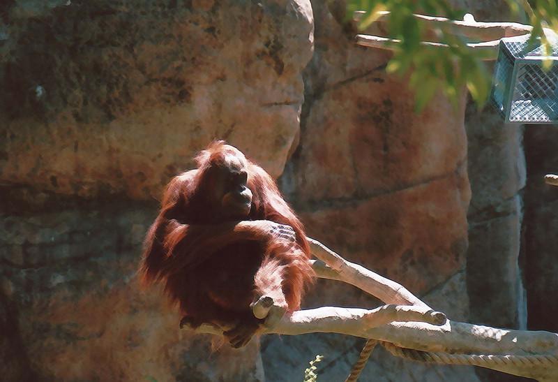 zoo crew 5 7-3-2007.jpg