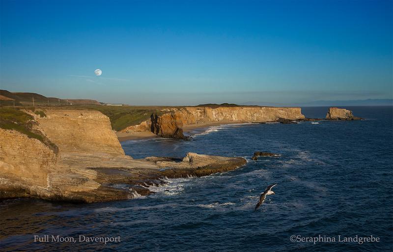 _DSC5637Davenport Full moon Seagull.jpg