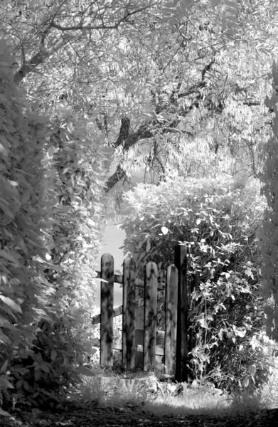 Gate 16x24.jpg
