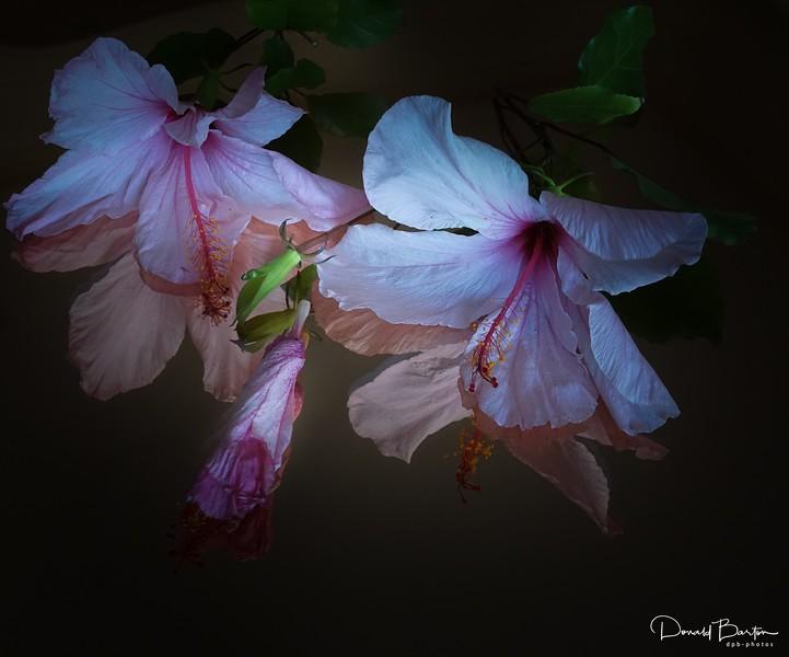 Reflected Hibiscus_-1.jpg