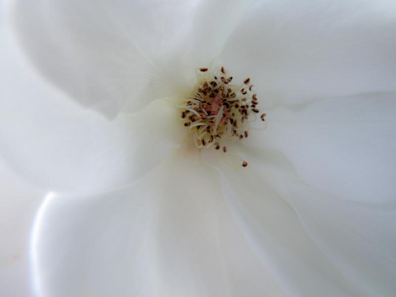 aug8_flower.jpg