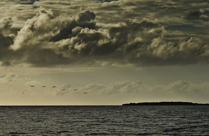 _RQ96263  Pelicans, Belize