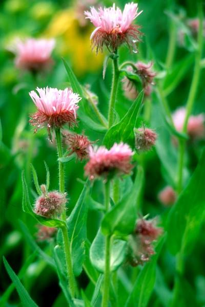 amh FLOWERS (1148).jpg