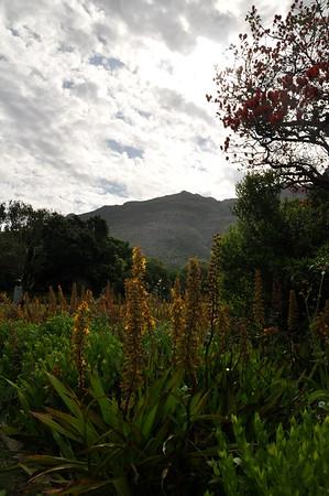 Kirstenbosch Botanical Gardens   Scenery