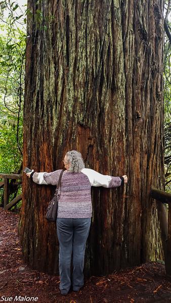 02-13-2021 Part 2 Prairie Creek Redwood State Park-8.jpg
