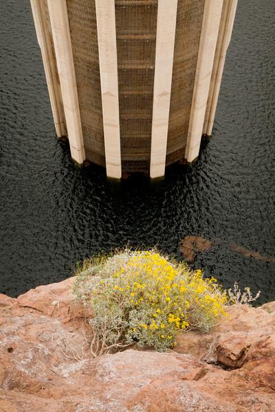 Voda do elektrárny teče skrz tato česla, ale odebírá se až celkem hluboko pod hladinou, aby se z turbín nestávaly mlýnky na maso.