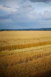Winter Wheat 2