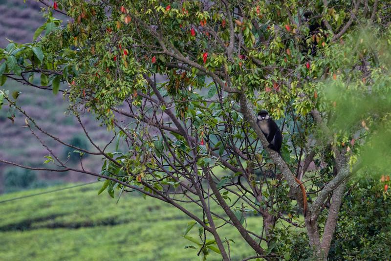 Uganda_GNorton_03-2013-647.jpg