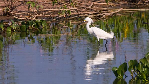 Travelogue-Pantanal  2014