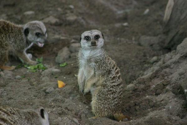 Toronto Zoo 2004