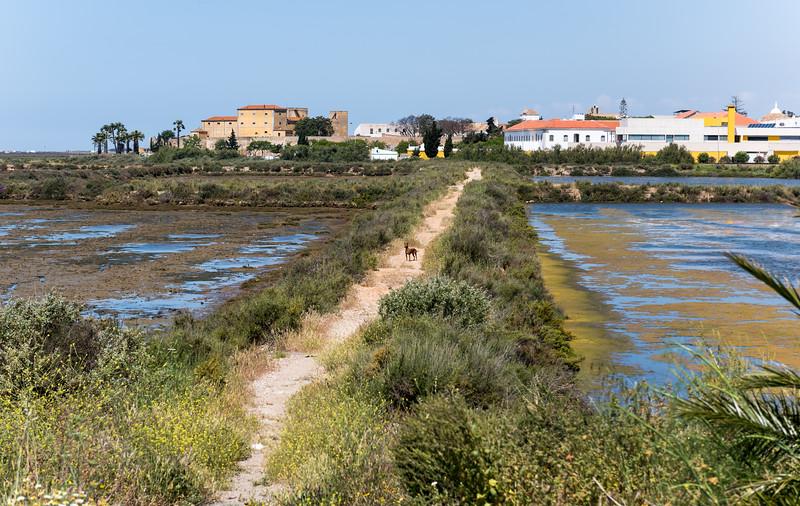 Faro 184.jpg