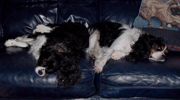 Casey & Daisy