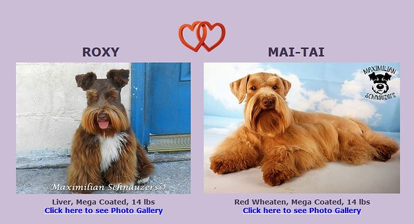 Roxy & Mai-Tai Puppies, DOB 3/02/2020