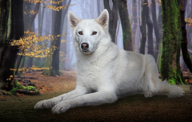 Husky-8.jpg