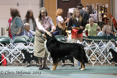 Bred by Exhibitor Dog BMDCA 2013
