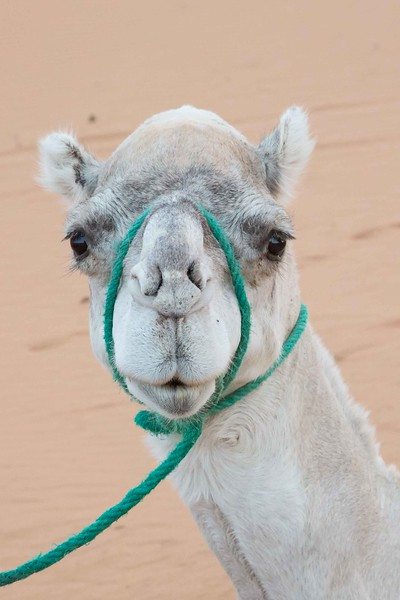 160924-125859-Morocco-0128.jpg