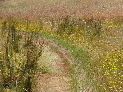 Seasonal beauty of Hayfield-selected photos
