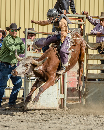 Sunday RoughStock Events
