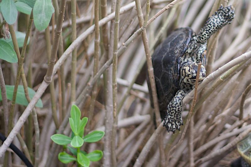 Turtle at the SC Aquarium