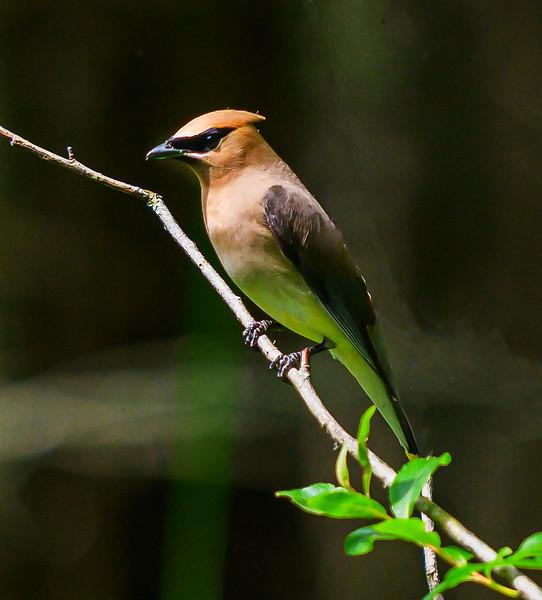 Thorne Swift Nature Preserve, Harbor Springs, Michigan - 2019