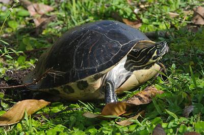 Turtle Nesting & Eggs