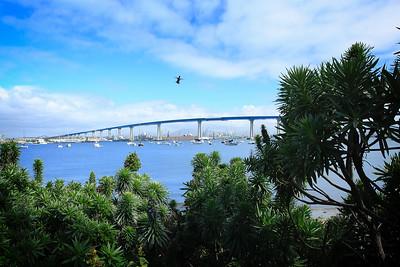 Hummingbird flight over Coronado Bridge, Coronado, CA